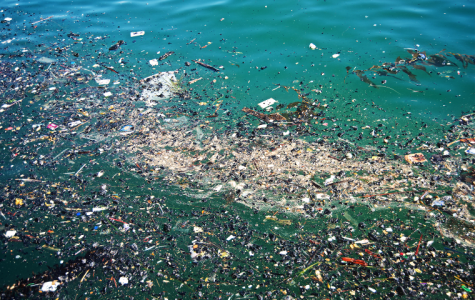 The Ecological Impact of the Great Pacific Garbage Patch