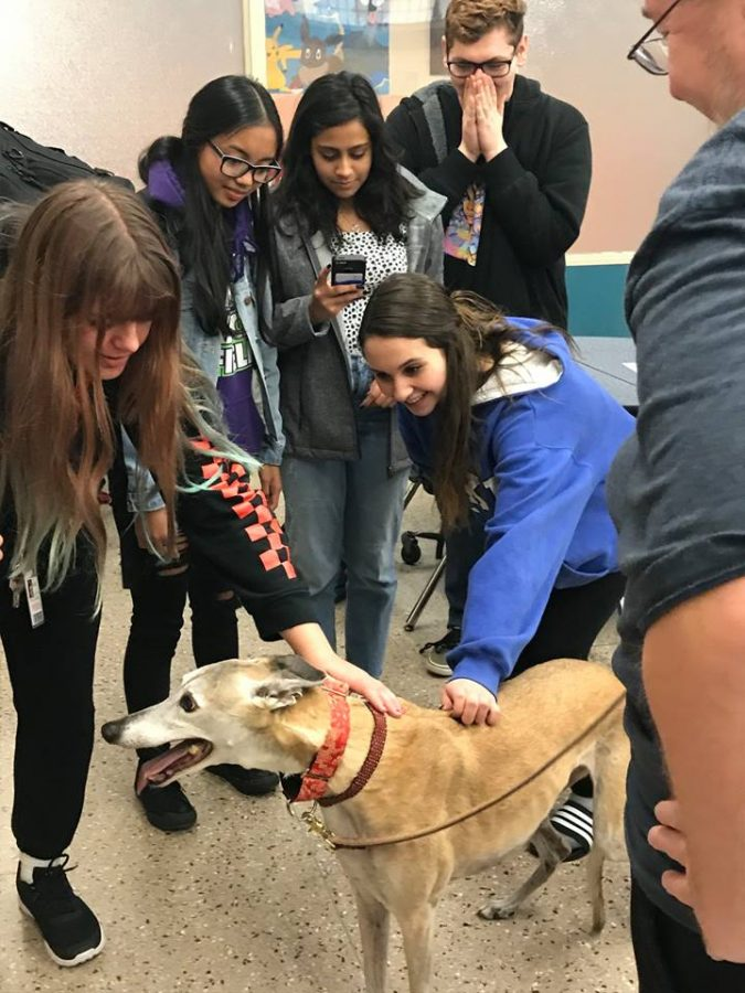 Students+meet+the+rescued+pups%21