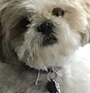 Meet Mr. DiTomasso's dog, Daisy!