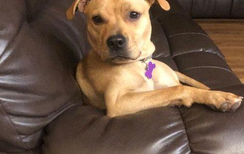 Meet Ms. Lipari's dog, Brooklyn!