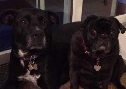 Meet Ms. Berry's Puppies!