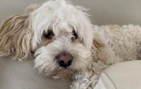 Meet Mrs. Mackiewicz's dogs, Lola & Buckley!
