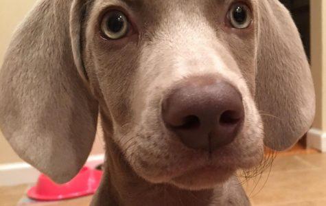 Meet Ms. Salitsky's dog, Sasha!