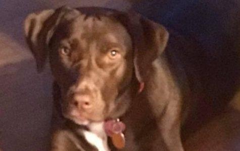 Meet Mrs. Vona's dog, Coco!