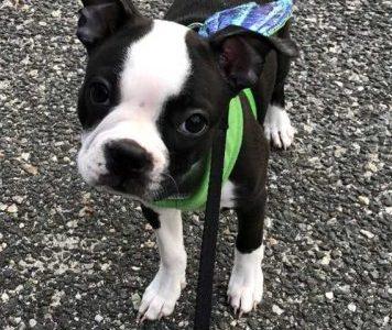 Meet Ms. St. Germain's dog, Reese!