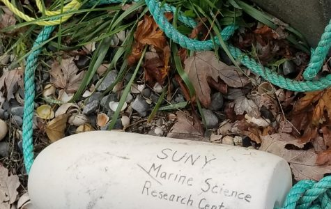 Students 'Sea' Stonybrook Scientist's Routine