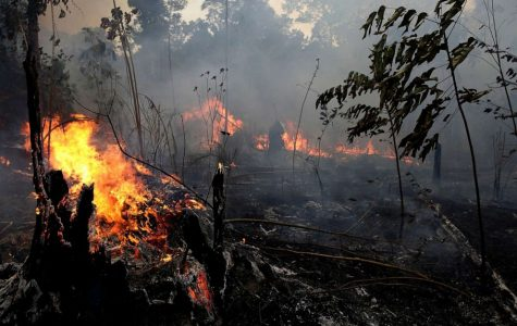 The Amazon Fires