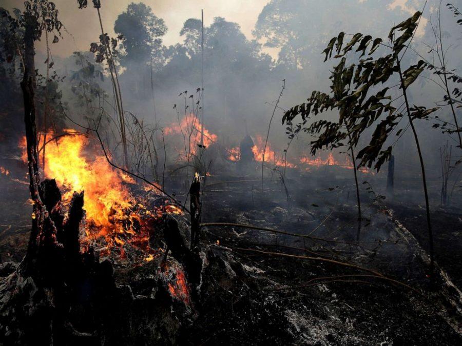 The+Amazon+Fires