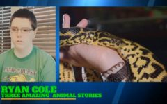 Amazing Animals Series #1